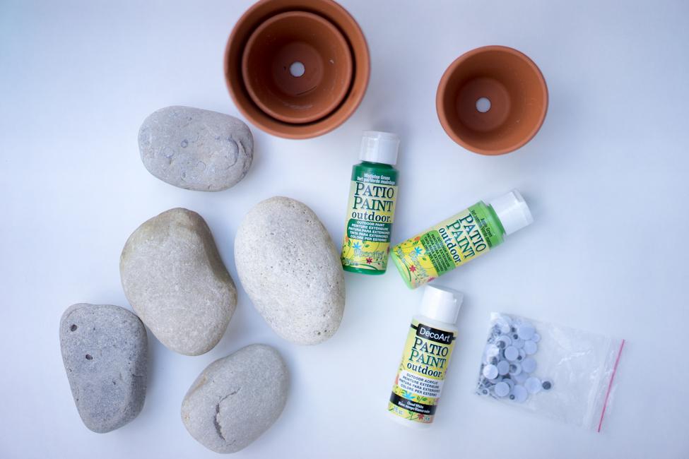 Supplies for Pet Rock Cactus