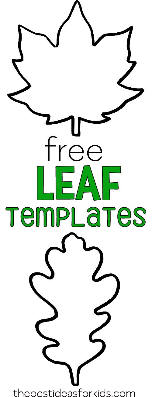 graphic regarding Printable Leaf Stencils referred to as Leaf Template - The Most straightforward Strategies for Youngsters